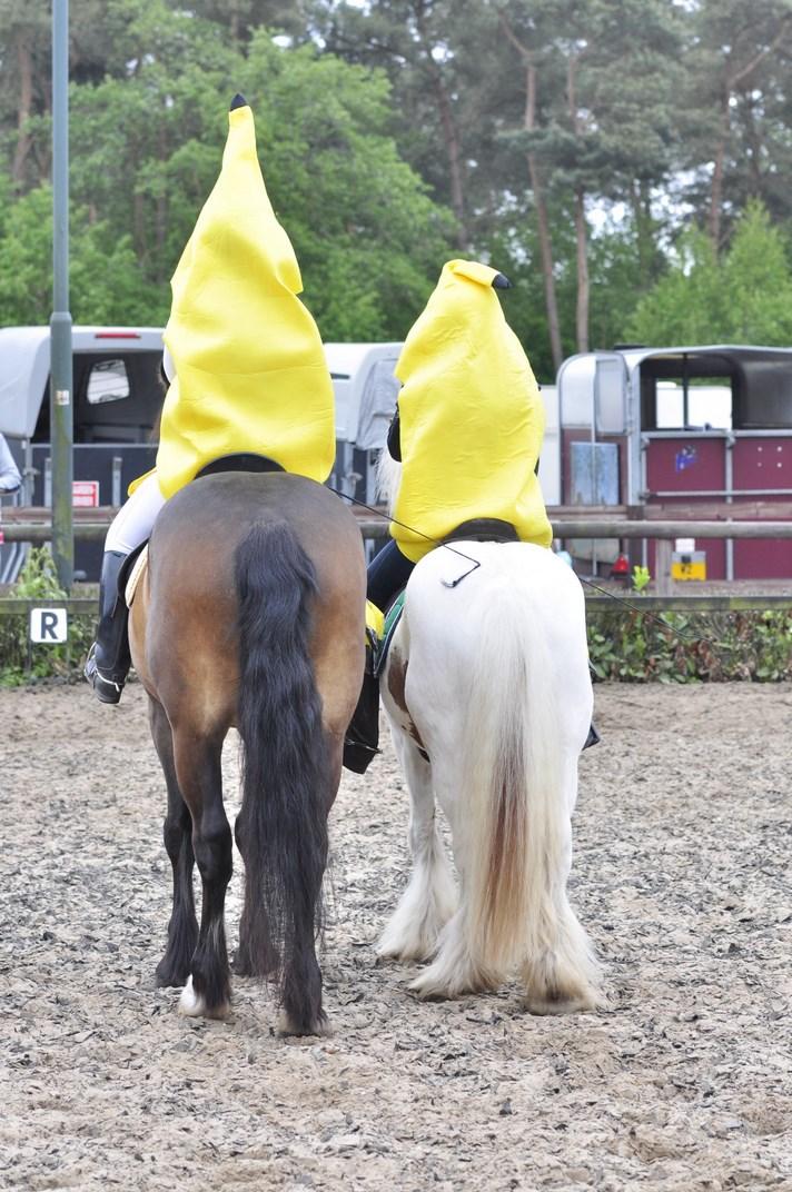 springen paardrijden treekhoeve